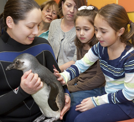 Penguin Encounter_blog