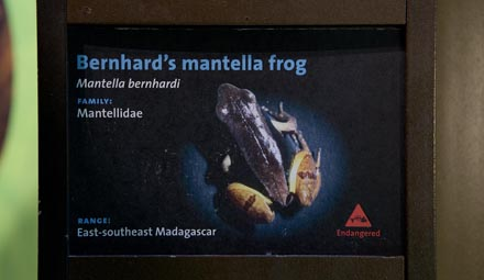 Endangered mantella sign_blog