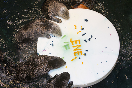 SOAW otters finishing cake_blog